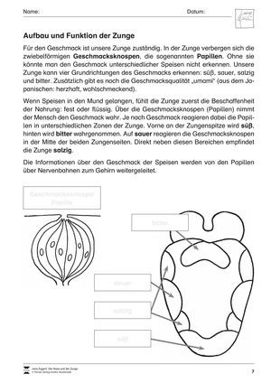 Aufbau und Funktion der Zunge: Arbeitsblätter