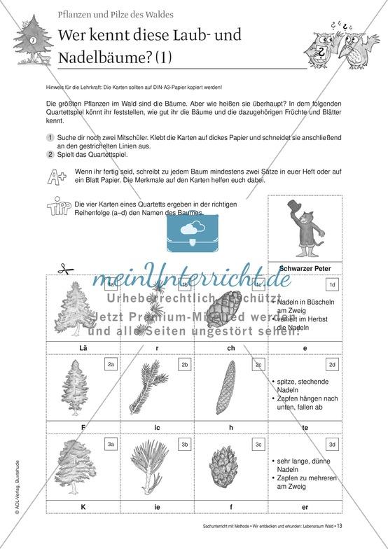 Pflanzen und Pilze des Waldes