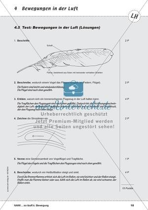 Test zu Bewegungen in der Luft: Fliegen, Schweben, Segeln