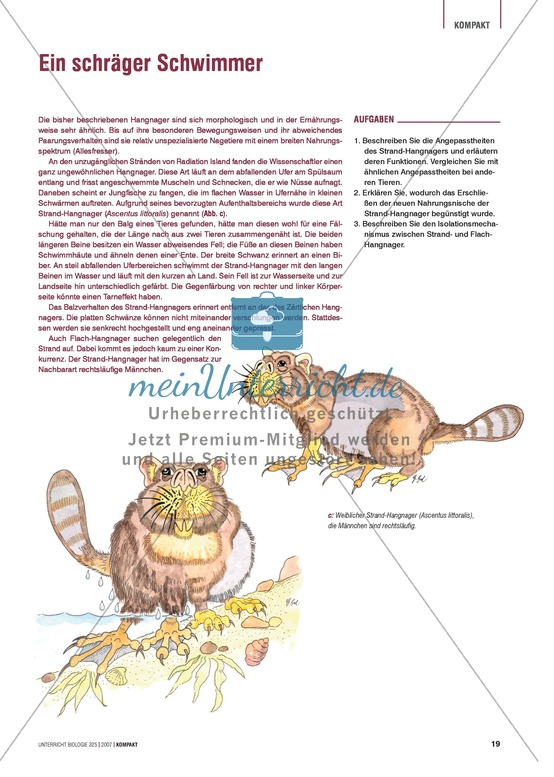 Ein schräger Schwimmer: Nischenerschließung und Anpassung an den Lebensraum am Beispiel des Hangnagers