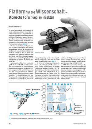 Bionik: Flattern für die Wissenschaft - Bionische Forschung an Insekten - Info-Text und Aufgaben
