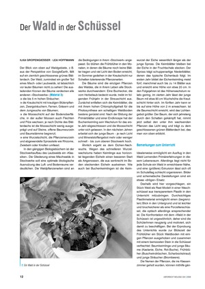 Der Wald in der Schüssel - Wachstum von Bäumen und die Stockwerke des Waldes - Info-Text und Aufgaben
