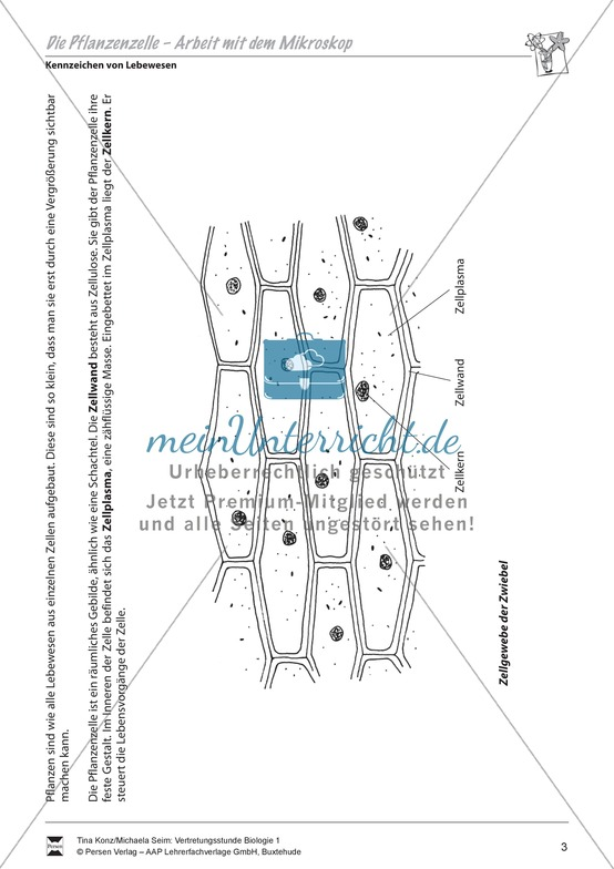 Pflanzenzelle: Zellgewebe der Zwiebel, Zwiebelhaut