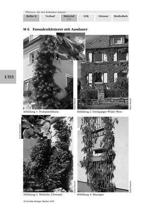 Kletterpflanzen: Art + Wirkung von Festhaltevorrichtungen