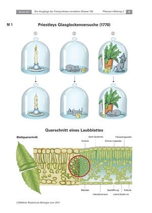 Die Vorgänge der Fotosynthese: Querschnitt eines Laubblattes + Versuche mit der Wasserpest